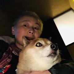 iphone photo 2744: Flashing night watch. Akabane Tokyo, 24 Jan 2020 (megumi_manzaki) Tags: iphone selfie flash dog night eye