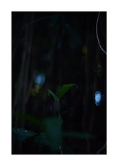 This work is 7/21 works taken on 2019/12/28 (shin ikegami) Tags: sony ilce7m2 a7ii sonycamera 50mm lomography lomoartlens newjupiter3 tokyo 単焦点 iso800 ndfilter light shadow 自然 nature naturephotography 玉ボケ bokeh depthoffield art artphotography japan earth asia portrait portraitphotography