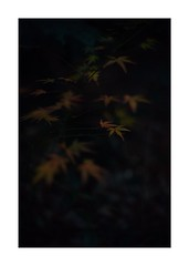 This work is 9/21 works taken on 2019/12/28 (shin ikegami) Tags: sony ilce7m2 a7ii sonycamera 50mm lomography lomoartlens newjupiter3 tokyo 単焦点 iso800 ndfilter light shadow 自然 nature naturephotography 玉ボケ bokeh depthoffield art artphotography japan earth asia portrait portraitphotography