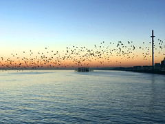 Brighton (SteveRotherPhotography) Tags: brighton beach sunset sea seaside unitedkingdom uk starling starlings bird birds iphonephotography