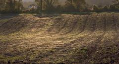Silk carpeting (Jean-Luc Peluchon) Tags: fz1000 charente aquitaine nouvelleaquitaine france paysage landscape light lumière araignée spiderweb spider toiledaraignée cobweb
