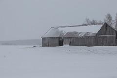 On a snowy day (soniamarmen) Tags: winter landscape snow snowy day soft light pastels barn