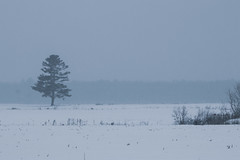 On a snowy day (soniamarmen) Tags: winter landscape snow snowy day soft light pastels tree