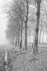 On The Wrong Side Of The Road (Alfred Grupstra) Tags: tree nature forest blackandwhite fog outdoors landscape winter branch woodland season autumn ruralscene nonurbanscene scenics mist nopeople beautyinnature footpath