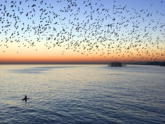 Brighton (SteveRotherPhotography) Tags: brighton beach sunset sea seaside unitedkingdom uk starling starlings bird birds paddleboard paddle