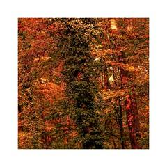 Autumn leaves (b_kohnert) Tags: outdoor autumnleaves leaves trees wood forest nature painting digitalpainting digitalart