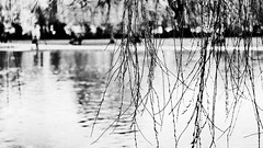 across the water (Francis Mansell) Tags: water river avon stratforduponavon willow weepingwillow plant tree bank monochrome blackwhite niksilverefexpro2 grainy reflection spring