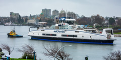 BC Electric Ferry Arrives in Victoria Inner Harbour (Cameron Knowlton) Tags: inner harbor ferry ferries nikon tug boat bc boats tubgboat harbour victoria canada d810 electric bcferries bcferry electricferry innerharbor innerharbour tugboat tugboats