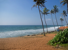 Tropical coast (ORIONSM) Tags: india varkala kerala coast shore tree palm blue sky sand sea water landscape vacation holiday travel olympus omdem1 olympus14150mm beach