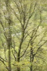 Lake District Trees Windy Long Exposure (r0bsh13lds) Tags: trees movement longexposure green lakedistrict