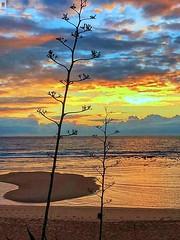 Playa de Cádiz cualquiera.-Atardecer (In Dulce Jubilo) Tags: photography paisaje panorámica panoramic playa beach belleza sun sunset atardecer nubes clouds landscape naturaleza nature fotografía cádiz calma relax palmar andalucia andalusia espagne españa spanien spain