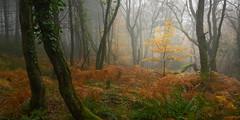 Audience (www.neilburnell.com) Tags: autumn mood atmosphere haldon forest woods trees