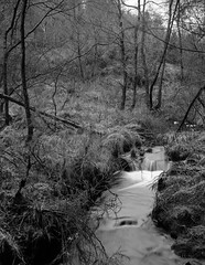 Keys Beck, Wheeldale, North York Moors, U.K. (ajmillerphoto) Tags: northyorkmoors schneider180 analogue darkroom largeformat wista45dx fomapan200