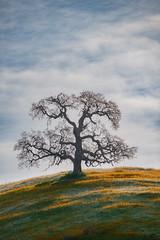 Elegance (jojo (imagesofdream)) Tags: shootlocal california wildflowers trees natgeo nikon kerncounty