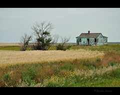 2010 (Gordon Hunter) Tags: teal color green tan grass field outside rural country farm abandoned decay bush yellow house home prairies sk canada nikon d5000 gordon hunter summer nikond5000