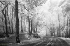 Nebel mit Raureif (Pfalzknipser) Tags: nebel raureif sw wald winter