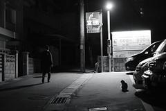 Untitled (easyroute) Tags: 202001 那覇 動物 沖縄 路地裏 建築物 街灯 白黒 2020 xt30 猫 xf35mmf14r bw blackwhite blackandwhite cat fujifilm fujifilmxseries fujinon japan monochrome naha nahacity okinawa untitled xf35mm xf35mmf14 alley フジノン モノクロ 富士フイルム 白黒写真