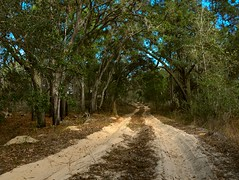 Fire Road (surfcaster9) Tags: sand fireroad outside trail trees lumix20mmf17llasph florida forest nature outdoors woods