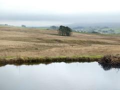 Day 24 (Emmadukew) Tags: pad20 24366 tebayservices moorland trees pond reflection mist