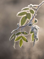 Ca pique **---+°-°-° (Titole) Tags: leaves titole nicolefaton frost green cold backlit bokeh thechallengefactory challengeyouwinner 15challengeswinner challengegamewinner friendlychallenges
