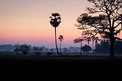 Misty morning in Thailand (Geir Bakken) Tags: mist yasothon isaan thailand thai farmer farming palm landscape morning artisitc mirrorless microfourthirds mft m43 olympus olympusomdem5mark2 60mm buffalo sunrise tree perfectbeauty happyplanet asiafavorites