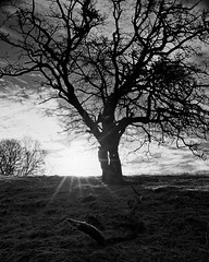 Sunrise tree (Douglas Jarvis) Tags: malham kirby yorkshire morning sun tree kodak f4 nikon
