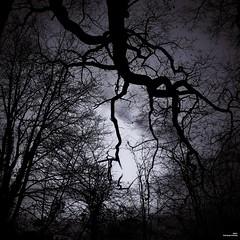 Night has a thousand eyes (Un jour en France) Tags: canoneos6dmarkii canonef1635mmf28liiusm carré yeux strange forêt nuit arbre nature noiretblanc noiretblancfrance monochrome black