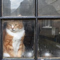 Allonby Cat (ambo333) Tags: allonby cumbria england uk cat feline petcat
