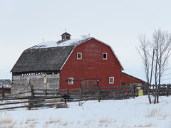 A favourite old barn (annkelliott) Tags: alberta canada eofcalgary rural ruralscene farm snow winter winterscene building old weathered decay barn red ruraldecay fence tree outdoor 10january2020 canon sx60 canonsx60 powershot annkelliott anneelliott ©anneelliott2020 ©allrightsreserved