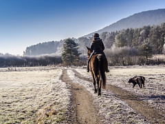 Lindauer Moor 210120-85 (martinritter1) Tags: hund reiter pferd frost winter natur