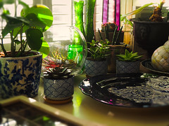 Plants 1 (Helen White Photography) Tags: interior plants
