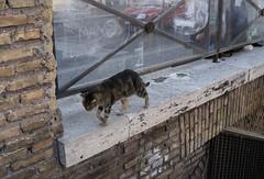 Largo Argentina - DSC07884_ep (Eric.Parker) Tags: rome roma italy 2014 europe cat argentina