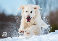 Picture of the Day (Keshet Kennels & Rescue) Tags: adoption dog dogs canine ottawa ontario canada keshet breed animal animals kennel rescue pet pets nature photography