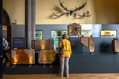Lady in Yellow (Jocey K) Tags: tripukeroupe2019 door uk people signs detail june scotland words shadows deer antlers universityofglasgow thehunterianmuseum romesfinalfrontiertripukeroupe2019 interior