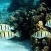 Fish Parade