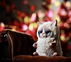 Grumpy (pure_embers) Tags: pure embers laura uk pureembers photography kitty teddy grumpy cat art doll cute adorable rioky studio grumpycat
