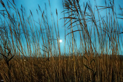 Por las ramas (candi...) Tags: ramas deltadelebro sol airelibre naturaleza nature sonya77ii lampolla