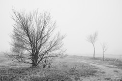 Fog tree (Peideluo) Tags: nature naturaleza blanco y negro black white landscape trees foggy silueta niebla frio cold winter
