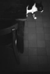 radio réveil, ou lui (chetbak59) Tags: washi argentique film
