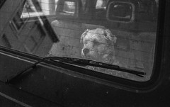 Dog in a car in Southwold (palmoid) Tags: analogue analog filmphotography leicam3 ilforddelta100 southwold doginacar dog