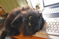 Happy Caturday! (Caulker) Tags: desk computer cat