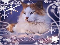 Harry Full of Fluff (jlynfriend) Tags: lg tabletpadphoto cat animal winter snow artwork artdesign artistic impression expressive morning fabric seasonal card lighting fluffy smileonsaturday