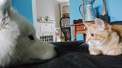X and Bo (osiristhe) Tags: dog cat