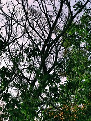 Where is the cat? 🐱🌳 (1 Love, 4 Eyes) Tags: arbol cat