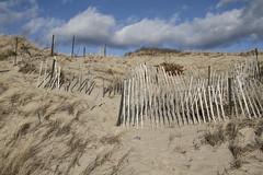 Climbing Fences (brucetopher) Tags: dune dunes sanddune sanddunes beach hike outdoor hiking travel outside duneshack trail nature fence