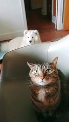 X and Z (osiristhe) Tags: dog cat