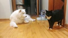 X and Sylvie (osiristhe) Tags: dog cat