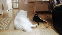 X and Burt (osiristhe) Tags: dog cat