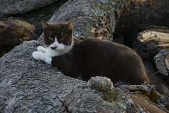 canela 6 (cristina.colmenares) Tags: cats cat aftermoon animal littleanimal light rosa nose nariz bigotes mostaches