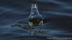 Photo of Bottle on the Clyde, Erskine, Scotland.